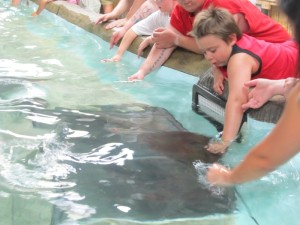 Petting the Stingrays!!